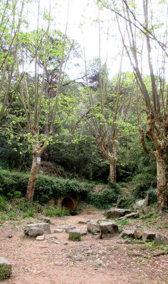 sunyera